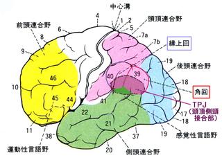 体外離脱(続・視覚について)1.『脳の中の身体地図』サンドラ&マシュー・ブレイクスリー TPJ