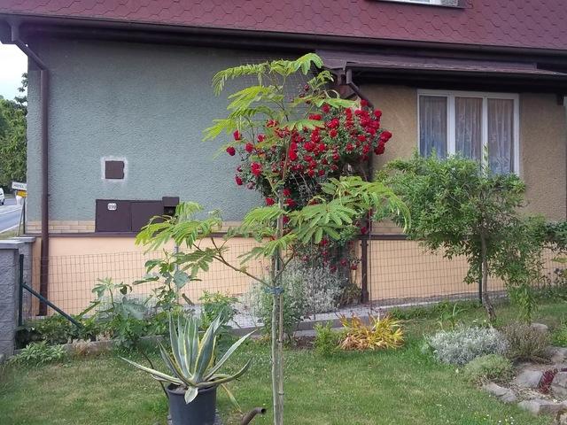 Léto na zahradě 009