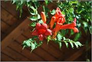 Léto na zahradě DSC_0138