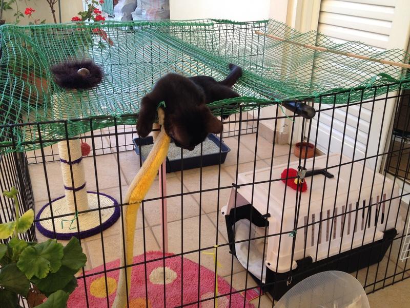 Πανθηράκος 2,5 μηνών αναζητάει την οικογένειά του Mailo_082