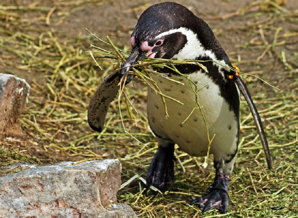 Pingvini - Page 3 8td9mfpf10y