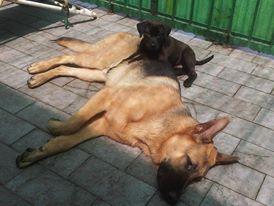 photos de vos chiens et de leurs copains de tous genres  45446_540953639288159_1737490944_n