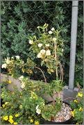 Léto na zahradě DSC_0128