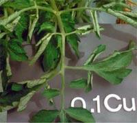 Nutrição de Plantas Aquaticas: Função, Deficiência e Fertilização. Nutricao_vegetal_13