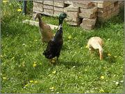 Naši zvířecí pomocníci P4280007
