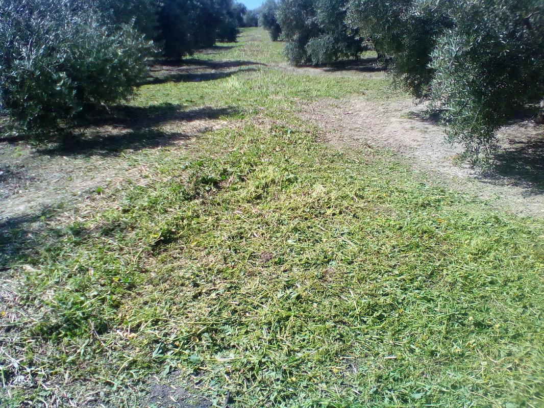 ¿Cómo incrementar el contenido en materia orgánica del suelo? IMG_20170318_130003