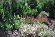 Léto na zahradě - Stránka 2 DSC_0016