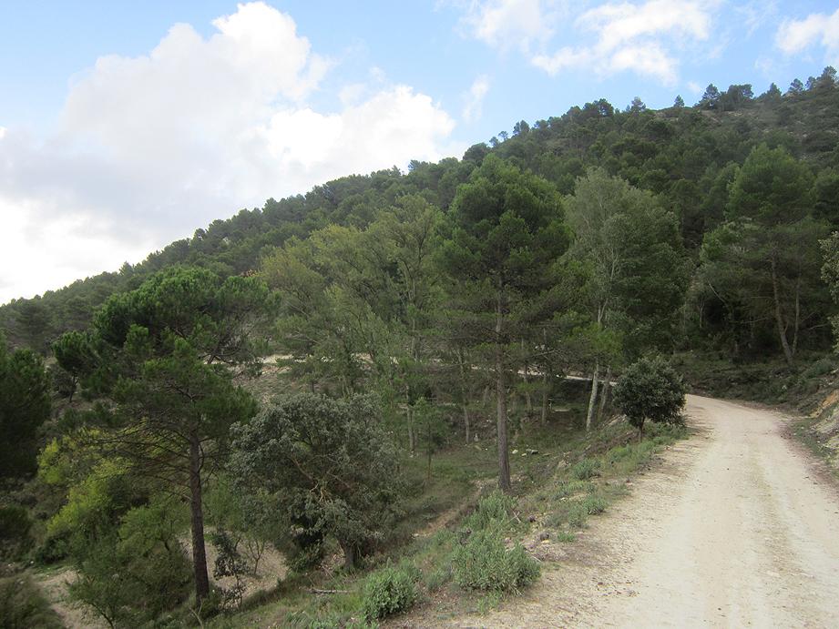 EL RECONCO,Biar + COVA NEGRA (ruta motosenderista) Biar9