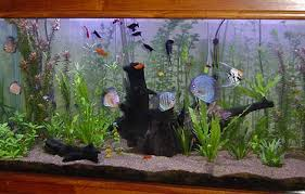 Aquariofilia ligado a educação de Jovens do Ensino Fundamental e Médio. Images