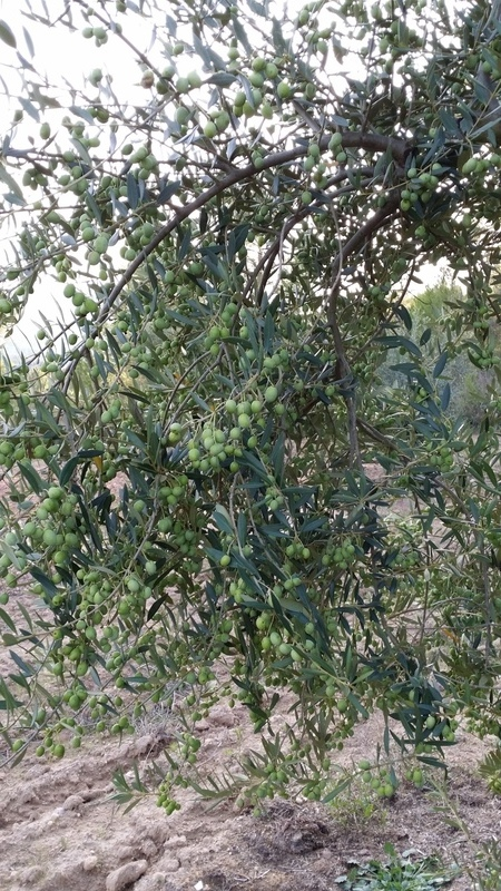 cosecha 2014-15 4jxe7n