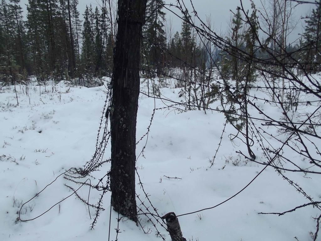 Зимний пейзаж DSCF2540