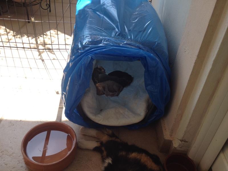 Κάρι, μια υπέροχη γατούλα και τα 4 μωράκια της 002