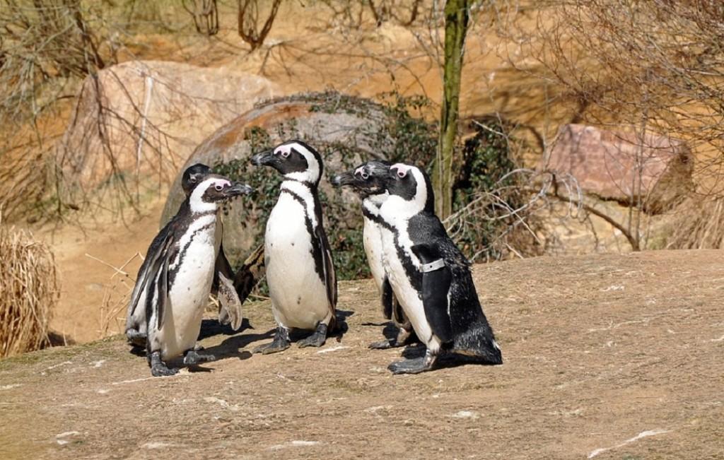 Pingvini - Page 3 203hucn8t0i