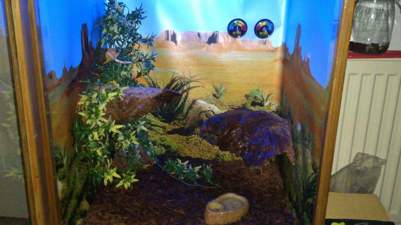 My custom habitat DSC_0562