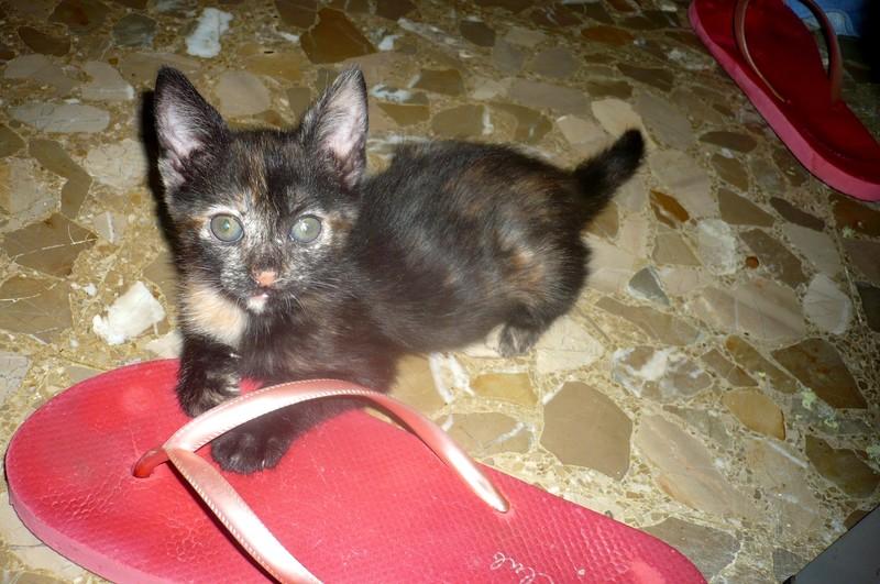 CARRIE gatitacarey de 2 meses URGE adopción-Córdoba Carrie2