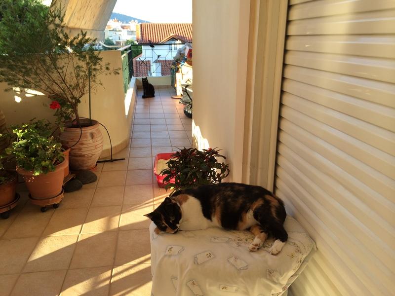 Κάρι, μια υπέροχη γατούλα και τα 4 μωράκια της - Σελίδα 11 Kira_Milou_26_8_14_4