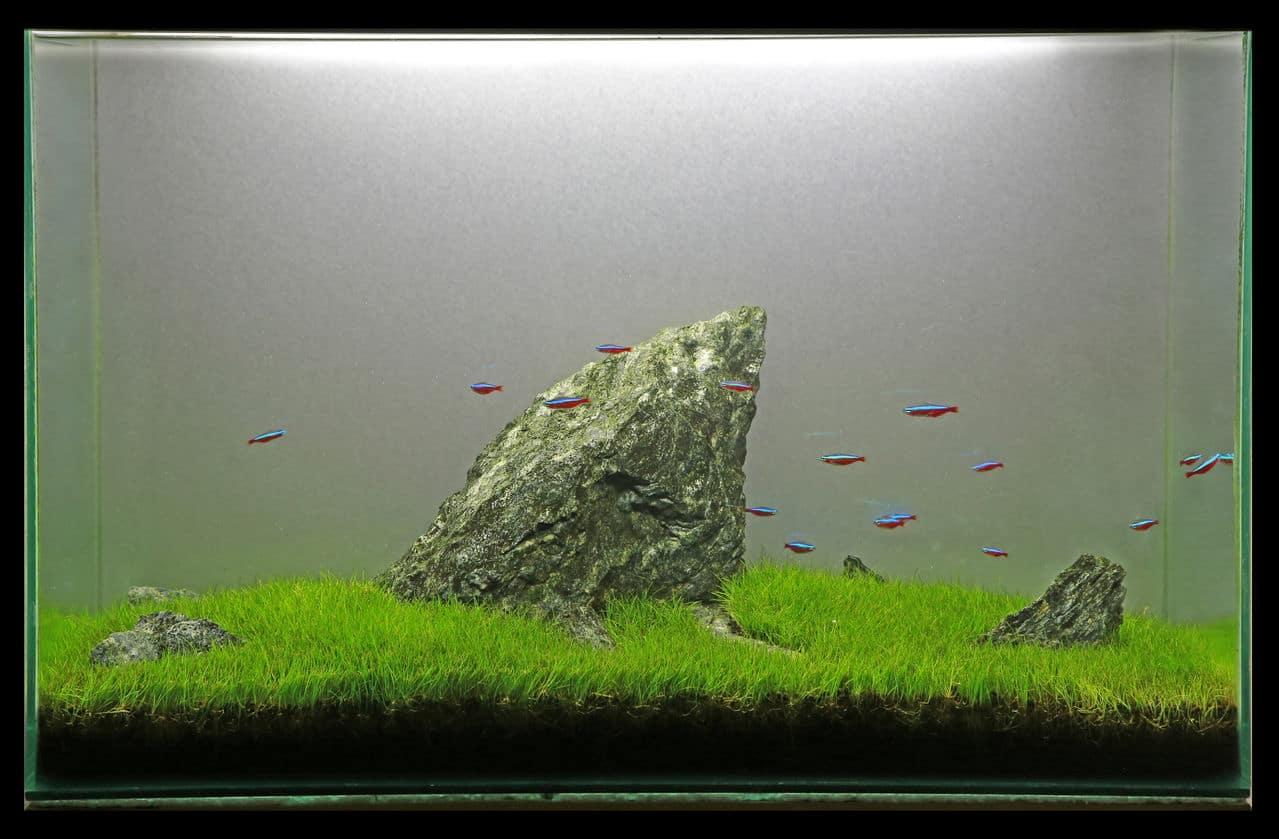 """5° Concurso aquapaisagismo """"VDA"""" 2014 (Fotografia, tema Momento Único). Foto_16"""