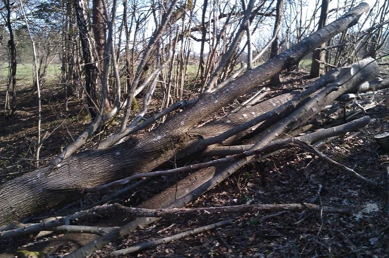 Izrada ogrijevnog drva - Page 2 IMAG0769