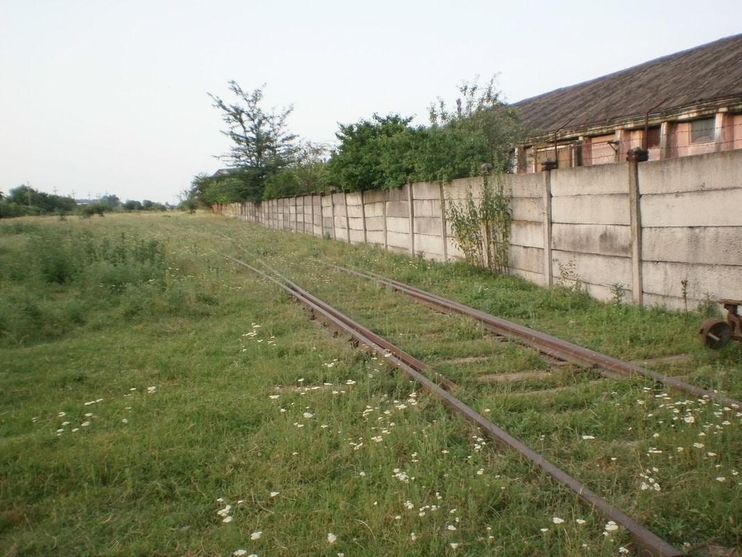 705 : Caciulati - Snagov Sat - Snagov Plaje - Pagina 9 P1012306
