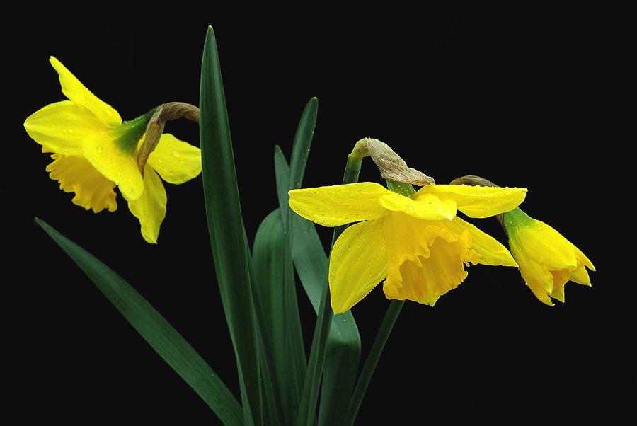 Žuto cveće - Page 2 02a7ga3qmaa