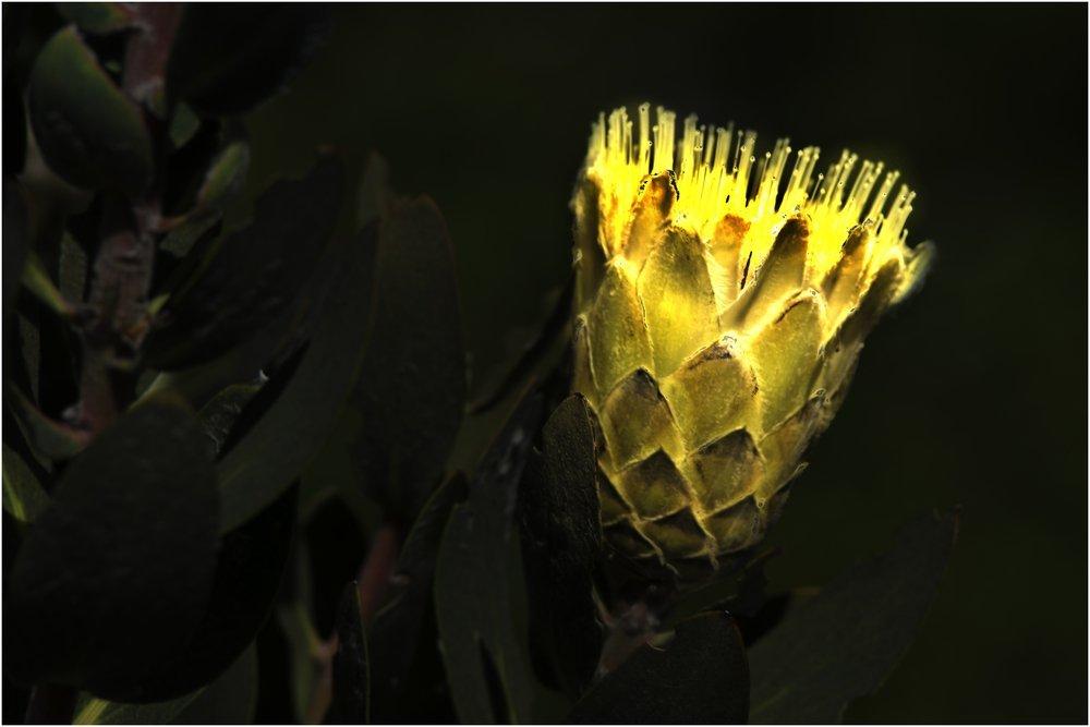 Žuto cveće - Page 3 5ef02xk8w24