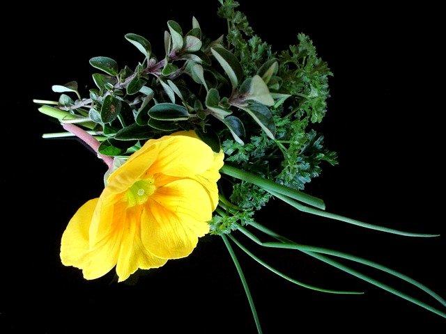 Žuto cveće - Page 3 7qk8ccm5fpq
