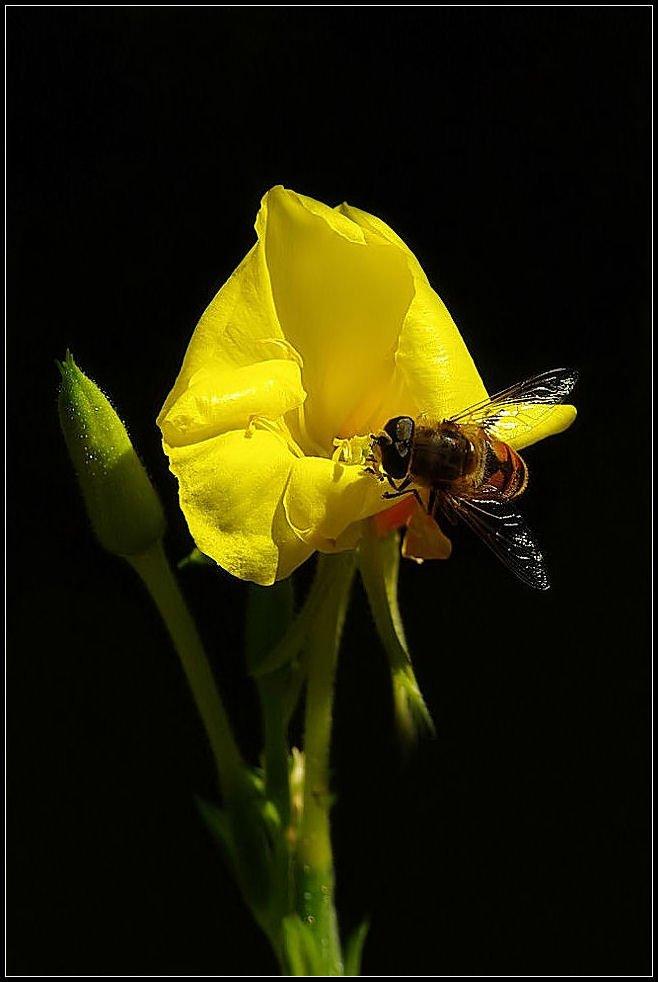 Žuto cveće - Page 2 1sx9zu5z1lw