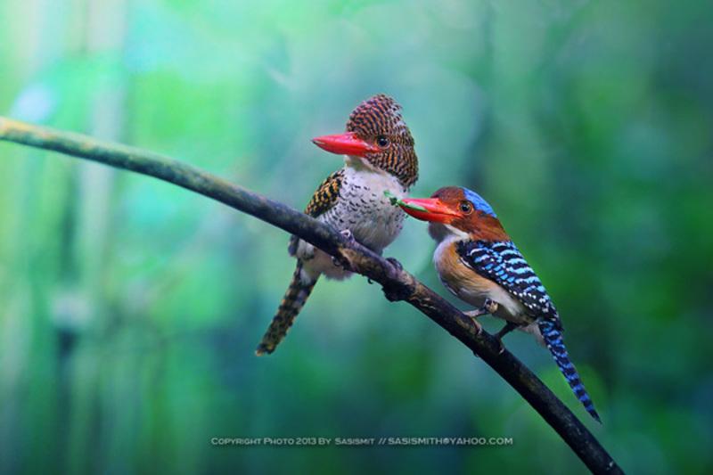Thế giới động vật sống động Nature_Galleries_2
