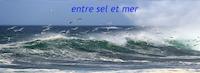 les nouveaux projets d'Elodie pour 2019 Entre-sel-et-mer-00
