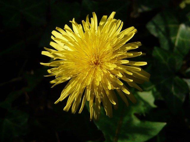 Žuto cveće - Page 3 2m0fu60shd1
