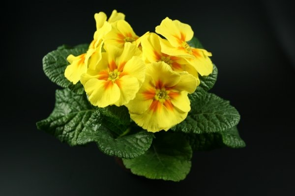 Žuto cveće - Page 3 7o6q39tdswm
