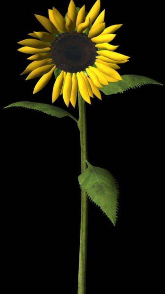 Žuto cveće - Page 3 8rejgddv46a
