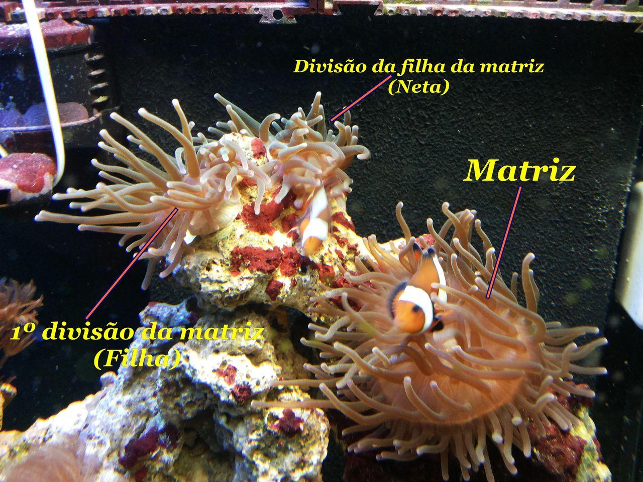 Aquário Marinho -110 lts- - Página 4 20140620_183925