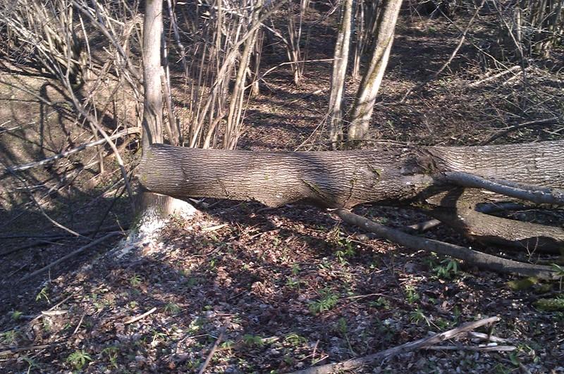 Izrada ogrijevnog drva - Page 2 IMAG0768