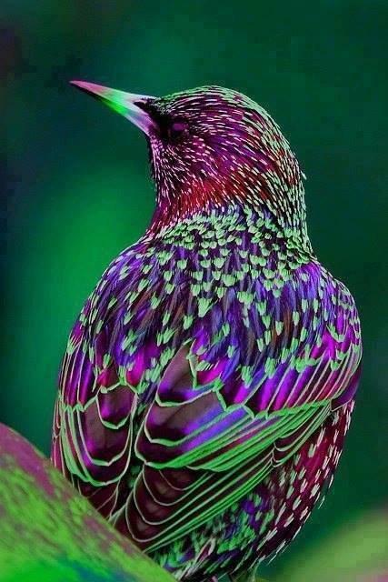 Ptice - Page 6 0x5vk94vkvk