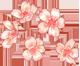 [INSCRIPCIÓN] Hanabi Festival Reggeerqh