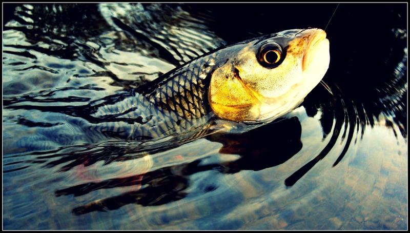 Fotografije ulova, ribe, oprema i dr. - Page 34 DSC04755