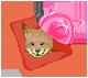 Hajime & Takehiko —ID— Zorro
