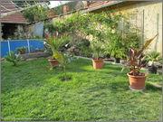 Léto na zahradě Zahrada_27_7_2