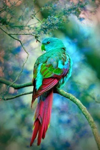 Ptice - Page 7 2zz4e2efhgz