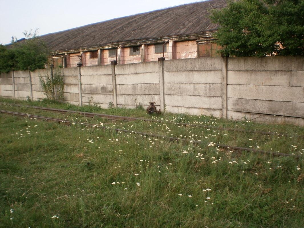 705 : Caciulati - Snagov Sat - Snagov Plaje - Pagina 9 P1012305