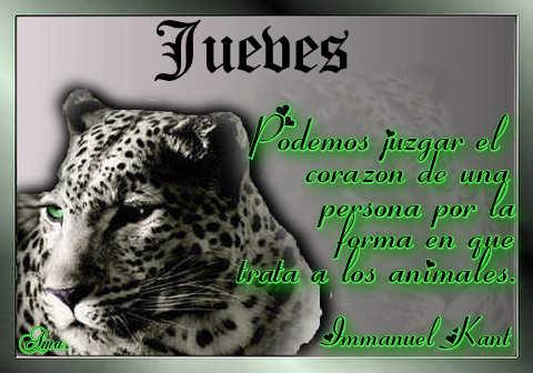 Tigre con Frase Jueves