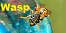 Insect Threat Wasp