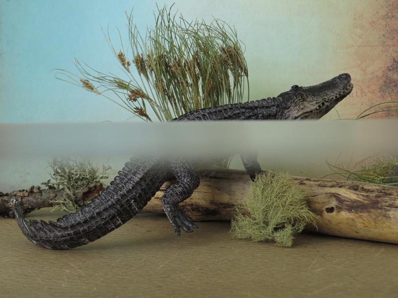 Mojö Alligator- walkaround/comparison by A.R.Garcia IMG_5931ed