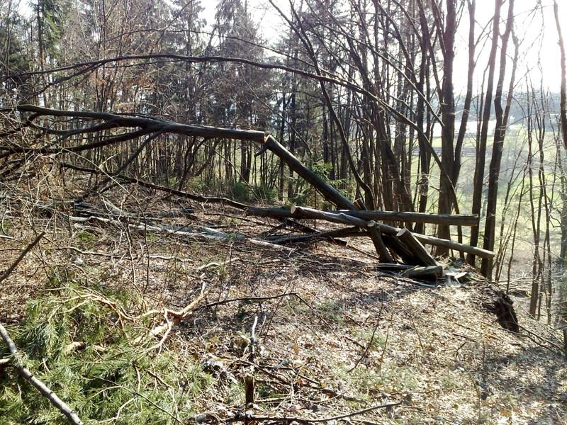Izrada ogrijevnog drva 25022014728
