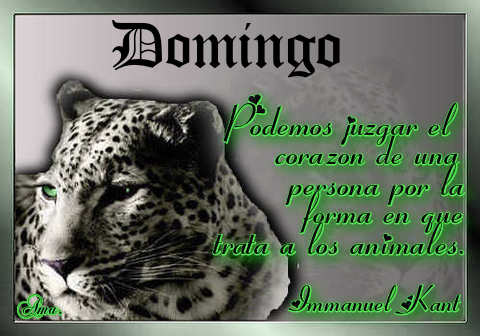Tigre con Frase DOMINGO