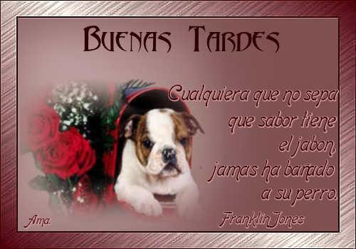 Vicente, mi Amigo Fiel Tardes