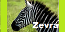 The Elusive Creature Zevra