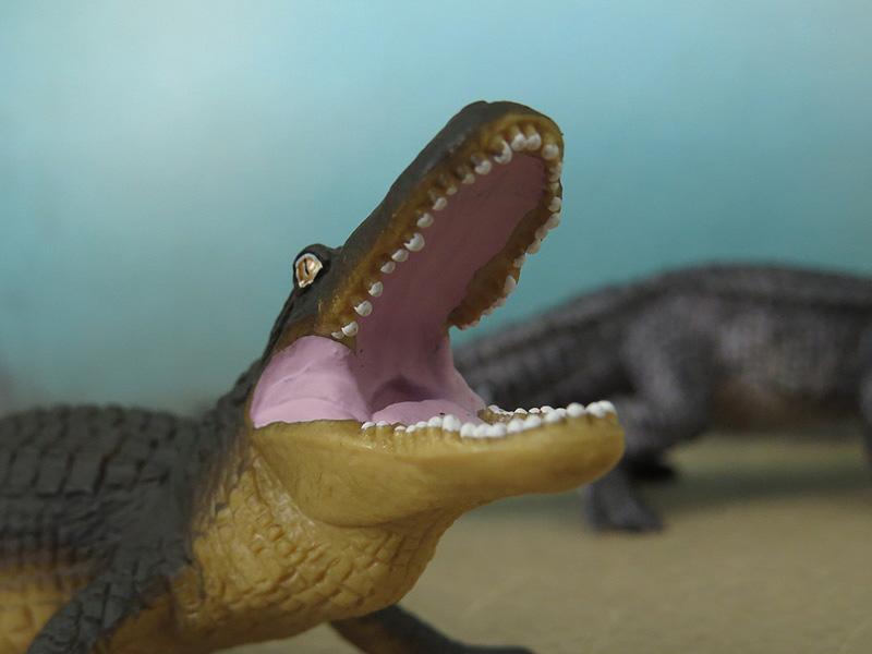 Mojö Alligator- walkaround/comparison by A.R.Garcia IMG_5922ed