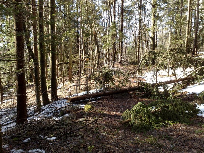 Izrada ogrijevnog drva 14022014711